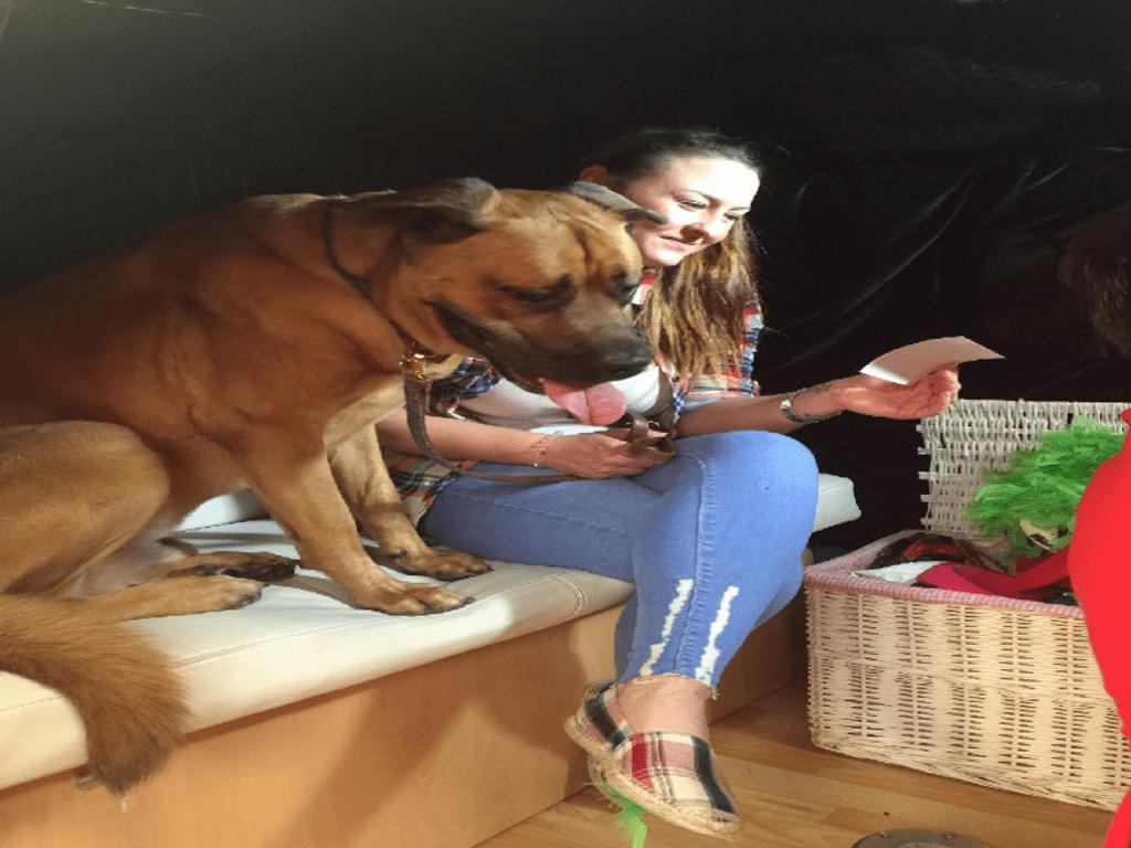 branded campervan dog photobooth for promo exhibition